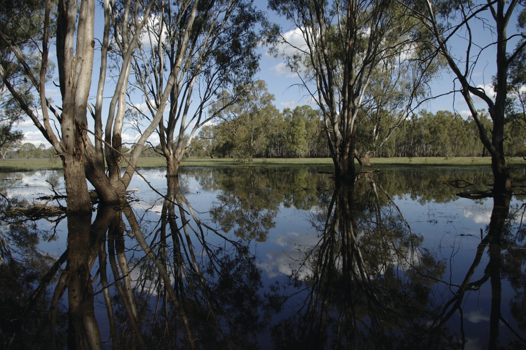 Barmah National Park1