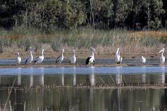 Barmah-Lakes_9489