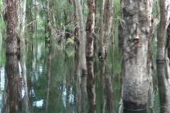 YYNAC-slider-3-trees-lakes
